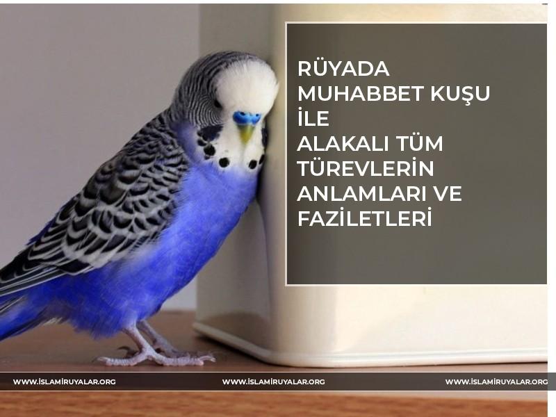 Rüyada Muhabbet Kuşu Anlamları