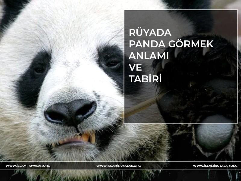Rüyada Panda Görmek