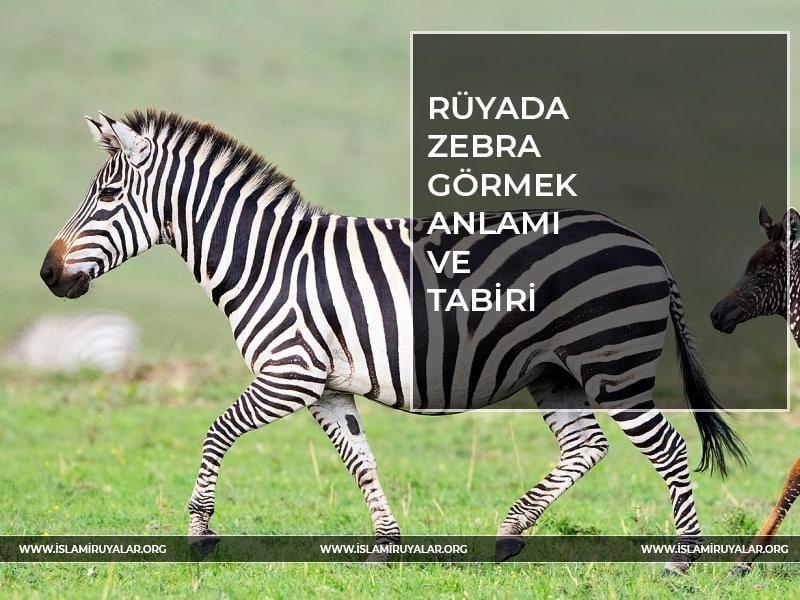 Rüyada zebra sürüsü görmek