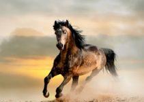 ruyada kosan at gormek ne anlama gelir