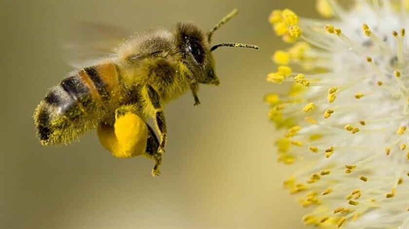 rüyada-arı-gormek