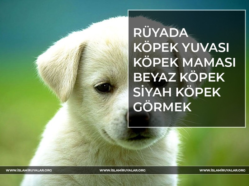 Rüyada Köpek